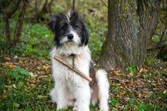 Овц-собака Стоковые Фото