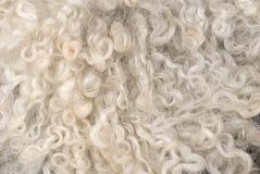 овчина Стоковое Изображение RF