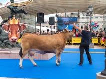 ОВЬЕДО, ИСПАНИЯ - 12-ое мая 2018: Ows ¡ Ð и выставка звезд быков торжественная на Стоковая Фотография RF