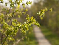 Огниво, северное Walses, деревья в солнечности Стоковое Фото