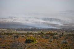Огни Африки в Fynbos полуострова накидки, Южной Африки Стоковое фото RF