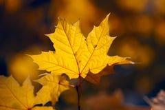 Огни листьев осени Стоковое Изображение