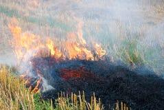 Огонь  Ð в пшеничном поле Стоковая Фотография