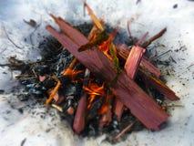 Огонь лагеря кедра Стоковая Фотография RF