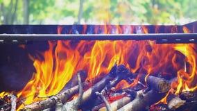 Огонь барбекю, костер, деревянное горение акции видеоматериалы