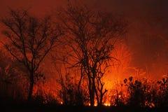Огонь Буша стоковые фото