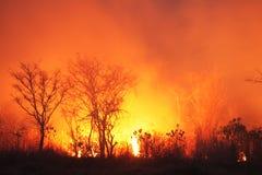 Огонь Буша стоковая фотография