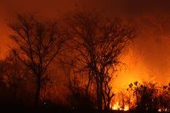 Огонь Буша стоковое изображение rf