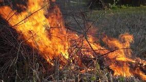 Огонь был сток-видео