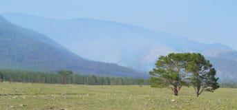 Огонь в лесах горы Стоковые Изображения