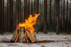 Огонь в лесе зимы Стоковая Фотография