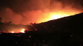 огонь в лесе на ноче сток-видео