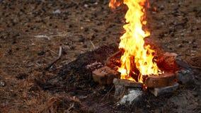 Огонь в лагерном костере Утихомиривая видео акции видеоматериалы