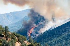 Огонь в сосновом лесе в Moccasin, Калифорнии Стоковая Фотография
