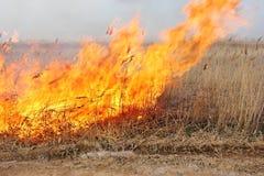 Огонь в степи Горящие сухие тростники Стоковые Изображения RF