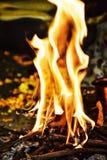 Огонь в течение поклонения в индийской традиции стоковое фото rf
