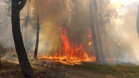 Огонь горя в сосновом лесе стоковая фотография rf