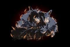 Огонь ИЛЛЮСТРАЦИИ CAT с большими желтыми глазами Стоковые Фотографии RF