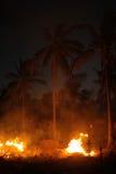 Огонь и пальмы на ноче Стоковые Фото