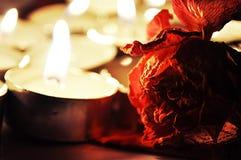 Огонь и цветок Стоковая Фотография