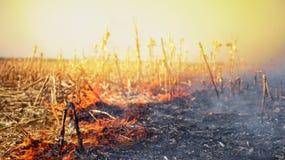 Огонь кукурузного поля после сбора стоковое изображение