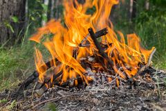 Огонь лагеря в лесе Стоковые Фотографии RF