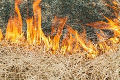 Огонь на природе - ожогах трава в поле Стоковое фото RF