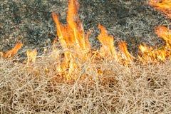 Огонь на природе - ожогах трава в поле Стоковые Фотографии RF