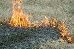 Огонь на природе - ожогах трава в поле Стоковая Фотография