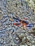 огонь, природа, hdr, гриль, сосиска, зола, земля стоковое фото rf