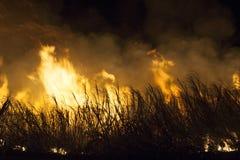 Огонь сахарного тростника стоковое изображение rf
