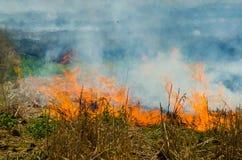 Огонь соломы Стоковые Изображения RF