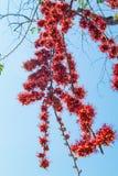 Огонь цветка Пакистана Стоковое Изображение RF