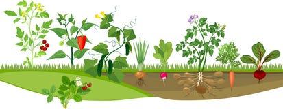 Огород с различными овощами бесплатная иллюстрация