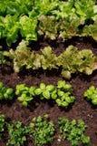 Огород Стоковая Фотография RF