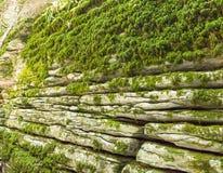 Огородите каменный лабиринт на месте недостатка после землетрясения Сочи, роща yew-boxwood стоковое фото