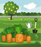 Огород моркови, лопаткоулавливатель и груша Иллюстрация вектора