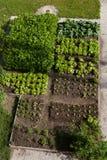 Огород Стоковые Изображения