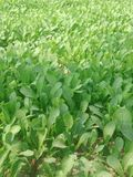 Огород Стоковое Изображение RF