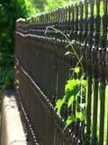 оградите ornamental Стоковое Изображение RF