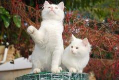 ограждающ котят сада сверните 2 Стоковое Изображение RF