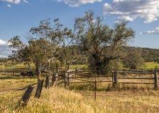 Ограждать на ферме Стоковые Фото