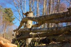 оградите солнцецветы лета лужка деревянные Стоковое Изображение RF