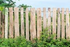 оградите солнцецветы лета лужка деревянные Стоковые Изображения