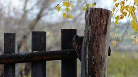 оградите солнцецветы лета лужка деревянные видеоматериал