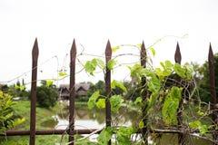 Оградите страшный хеллоуин, старое ограженное кладбище Стоковая Фотография RF