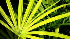 Огромная зеленая предпосылка лист Стоковые Изображения