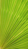 Огромная зеленая предпосылка лист Стоковые Фото
