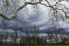 Огромная обрабатываемая земля долины NY Гудзона дерева явора Стоковая Фотография RF