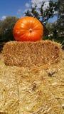 Огромная оранжевая тыква Стоковое Изображение